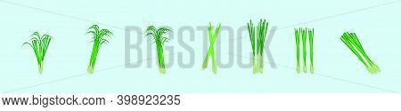 Set Of Lemongrass Cartoon Icon Design Template With Various Models. Modern Vector Illustration Isola