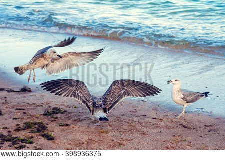 Seagulls By The Sea. Seagulls On The Beach At The Edge Of The Water