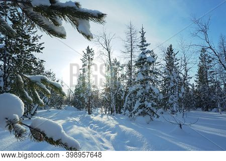 Winter Landscape Winter Frosty Day, Nature Of The Yamalo-nenets Autonomous Okrug, Extreme North