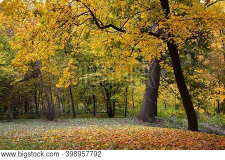 Autumn Colors In The National Dendrology Park Of Sofiyivka, Uman, Ukraine.