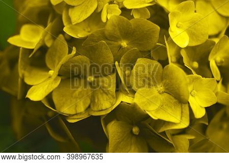 Total Yellow-colored Flowers On A Green Blurry Background