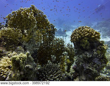 Coral Reef With Colorful Hard Corals And Fish