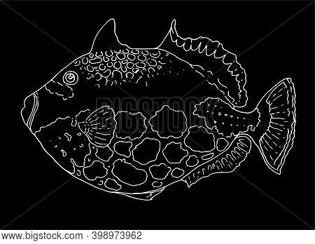 Vector Drawing Of A Hand-drawn White Outline Of A Fish. Illustration Of A Clown Triggerfish Isolated