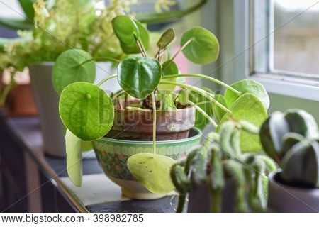 Small House Plants In Pots In A Home Interior Room On The Kitchen Window Ledge