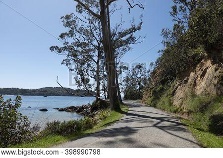 Large Eucalyptus Trees Cast Shadow Patterns On Narrow Coastal Road On Stewart Island.