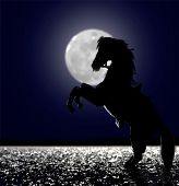 A horse in the moon light at beach poster