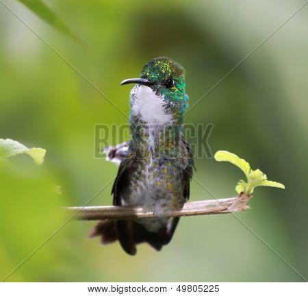 Close-up of a Hummingbird 02