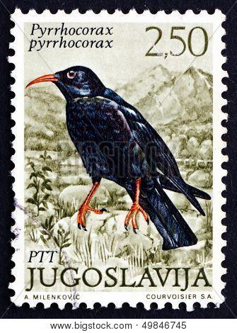 Postage Stamp Yugoslavia 1972 Red-billed Chough, Bird In Crow Fa