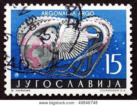 Postage Stamp Yugoslavia 1956 Paper Nautilus, Argonauta, Pelagic Octopus