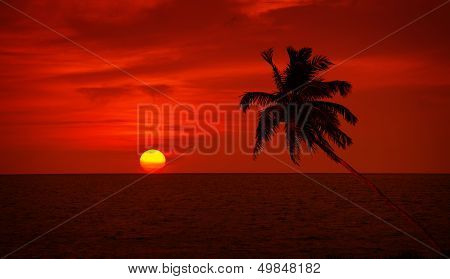 Palm Tree Silhouette On Sunset Sky Background