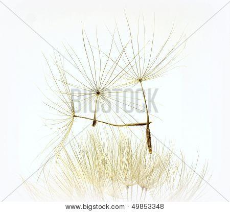 flight seeds