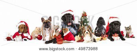 perro y gato y llevaba un sombrero de santa kitens