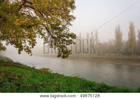 Yellowing Tree In Fog By The River
