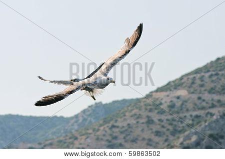 Sea Gull Flying Over The Rocks