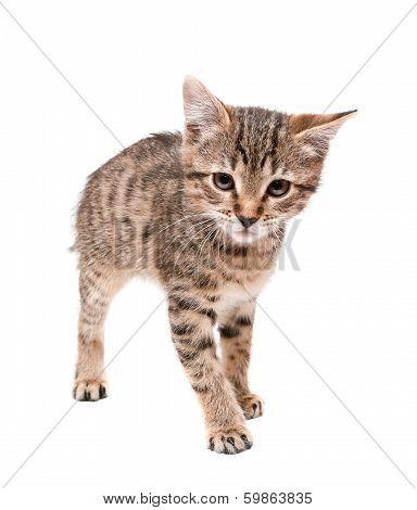 Kitten Walks