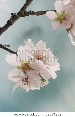 Spring Blossom Macro.