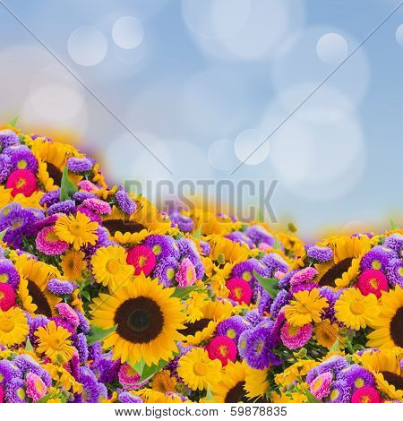 flowers garden with sunflowers