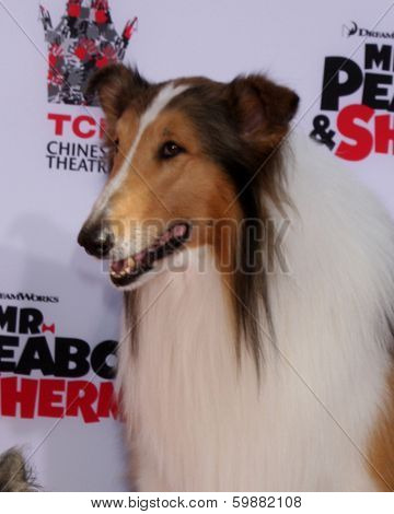 LOS ANGELES - FEB 14:  Lassie at the Mr. Peabody honored with Pawprints in Cement at TCL Chinese Theater on February 14, 2014 in Los Angeles, CA