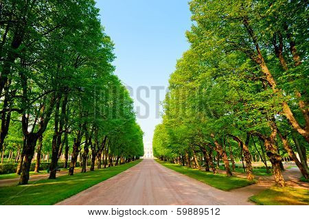 Green Alley In A Summer Park