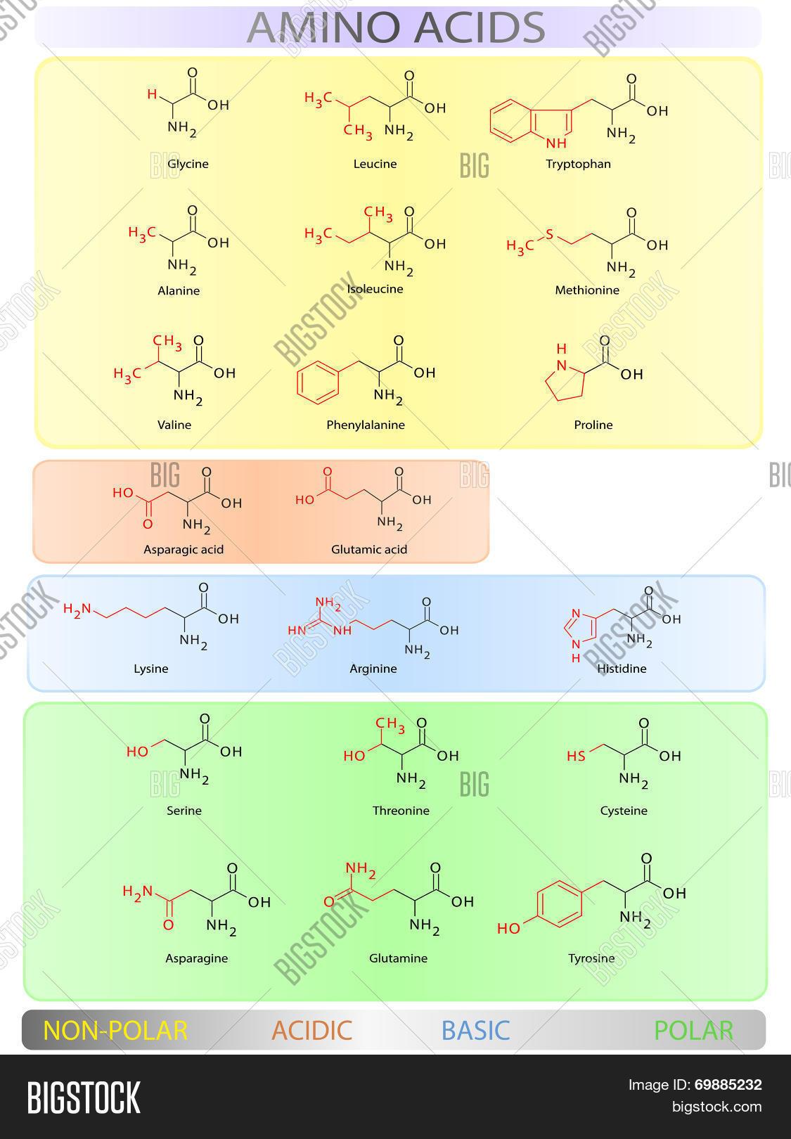 Tremendous Amino Acids Table Vector Photo Free Trial Bigstock Download Free Architecture Designs Embacsunscenecom