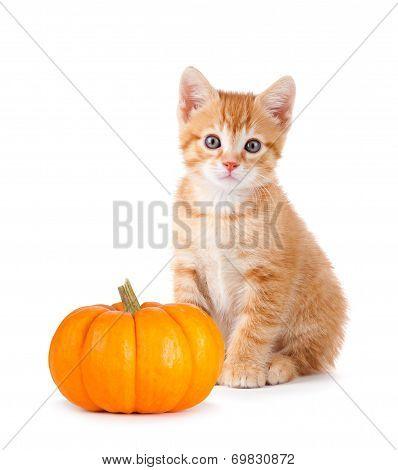Cute Orange Kitten With Mini Pumpkin On White.