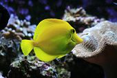 nice aquarium background with plants and fishes poster