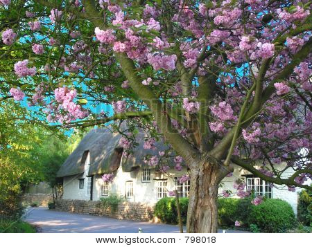 Cherry Blossom Thatched House