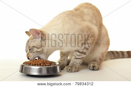 Cat eats dry food.