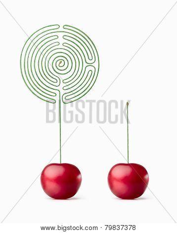 Cherry. Labyrinth