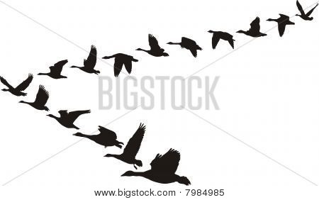 Geese flying in the shape of the unit