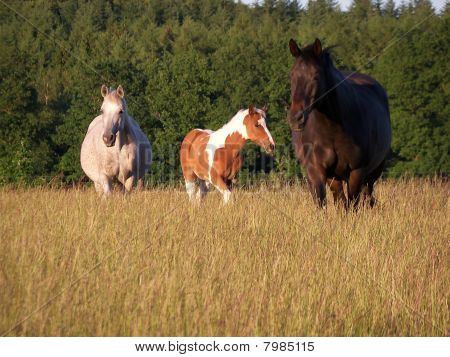 Group of three horses