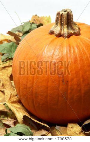 pumpkin on leafs