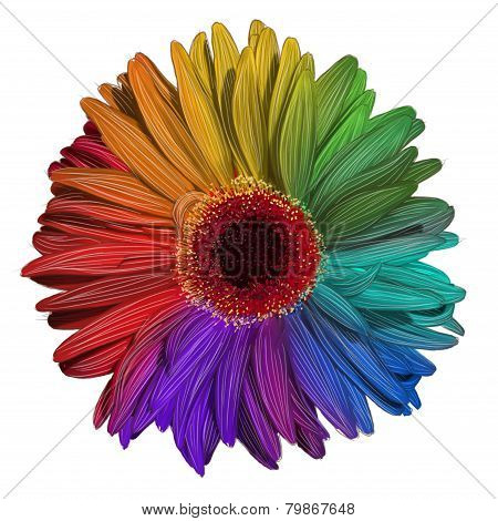 Drawing of colorful gerbera flower