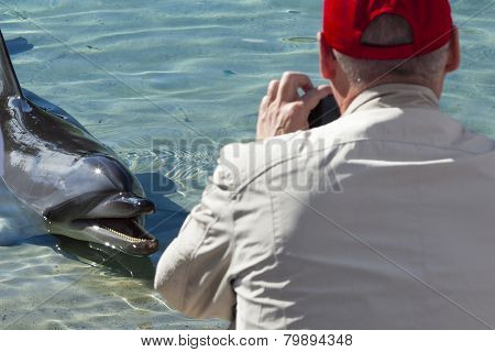 Man taking photos of friendly dolphin in captivity poster