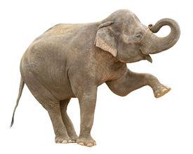 Indian Elephant Female Greeting Cutout