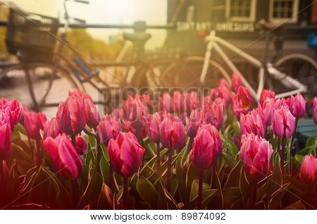 Tullips And Bicycles On Street Near Canal, Amsterdam, Netherlands