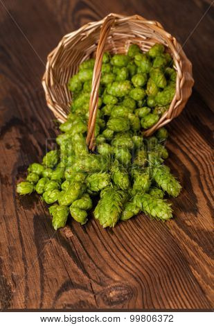 Fresh green hops on a wooden desk, served in osiers basket. Low depth of focus