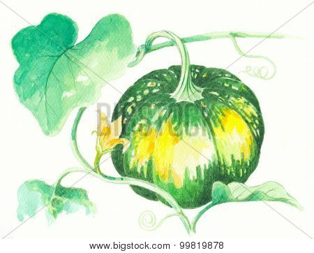 Squash water color painting