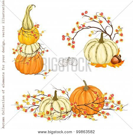 Autumn Collection of design decorations with pumpkins, branches Oriental Bittersweet and acorn, vector set 2.