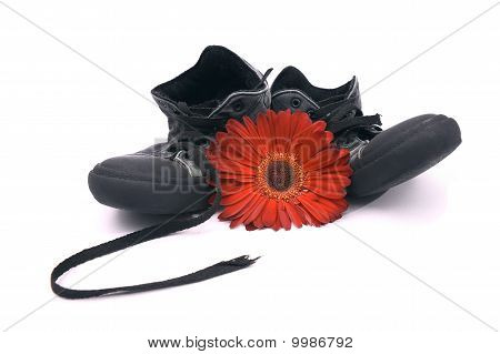 Old Shoes And Red Flower