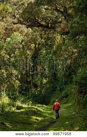 Nono, Ecuador Cloud Forest