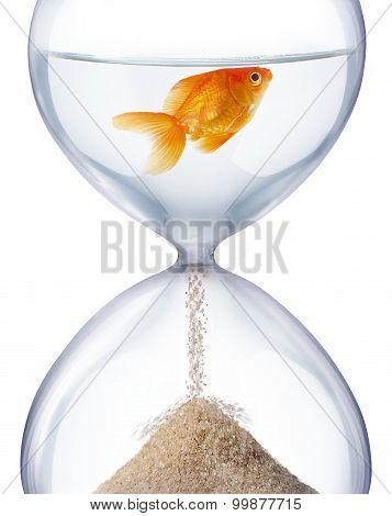 Aquarium hourglass.