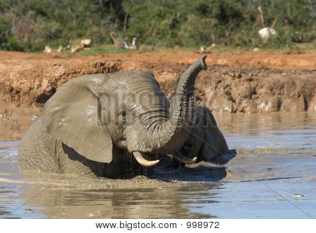 african elephants having fun in the water poster