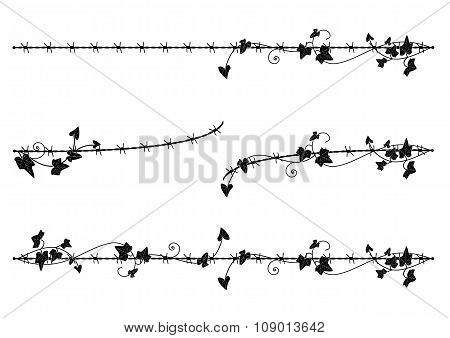 Ivy Border With Barbed Wire