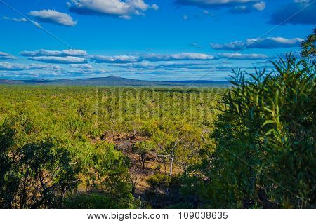 Eucalyptus forest in the Undara Volcanic National Park, Queensland, Australia