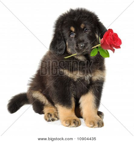 Puppy Dog With Flower