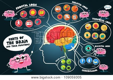 Infographic Parts And Functions Of Brain