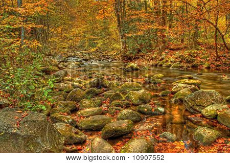 Golden Colors of fall In aTennessee