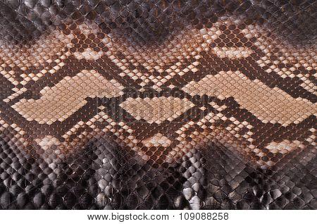 Beautiful python leather
