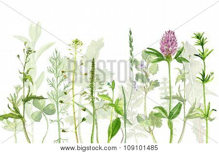watercolor drawing herbs and flowers